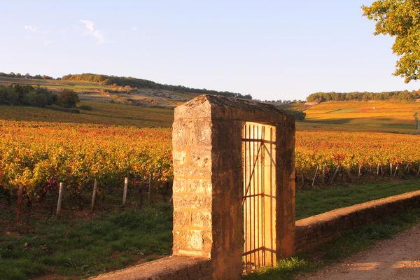Vignes-Givry-automne-2017-JM (8).JPG