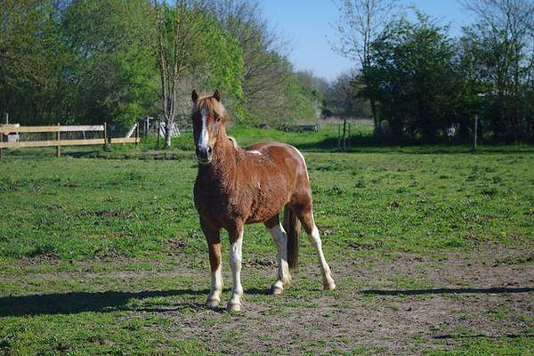 noirlieu-gite-du-chateau-cheval1.jpg
