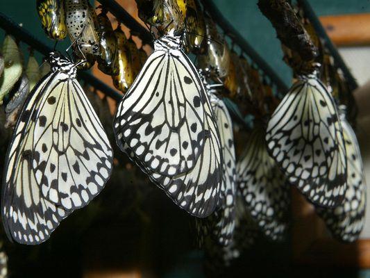 jardin-papillons-vannes (6).JPG