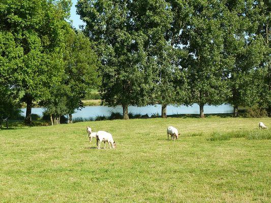rorthais-gite-charmille-moutons©BenedicteBesnard.jpg
