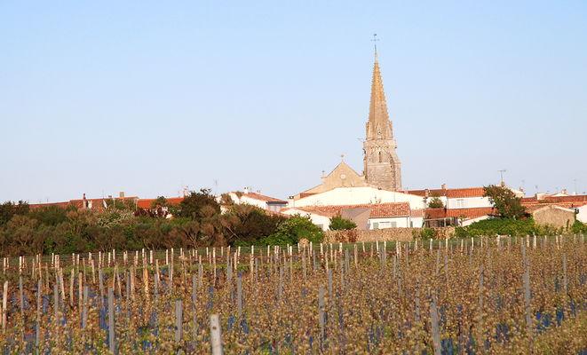 vue des vignes et eglise Sainte Marie.J.JPG