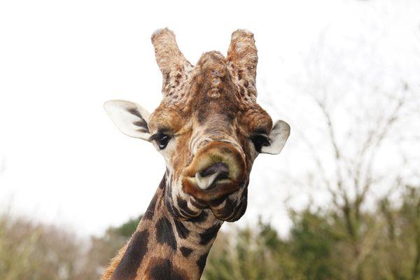 Zoo_PontScorff (2).jpg