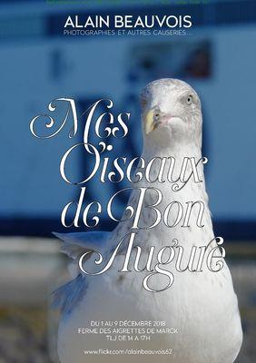 mes oiseaux de bon augure du 1 au 11 décembre.jpg