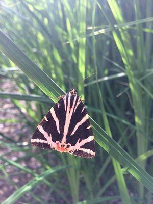 Papillons et compagnie.JPG