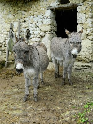 Vallée troglodytique des Goupillères ânes.jpg