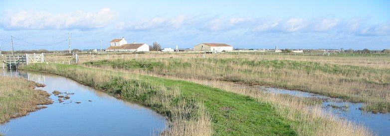 sentier des polders 5.jpg