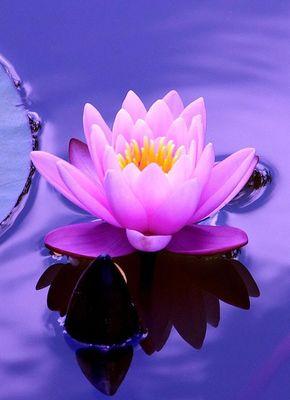 nuit de la méditation 17 février.jpg
