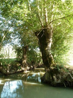 Embarcadere-de-l-abbaye-marais-poitevin-maillezais-85420-16.jpg