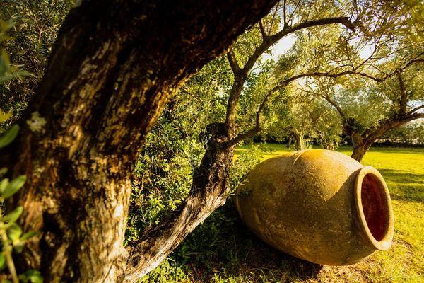 00098-mas des tourelles - beaucaire-photo aspheries.jpg