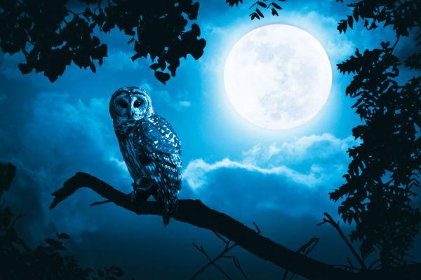 Balade_nocturne_La_Roche_Posay.jpg