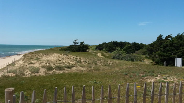 ile-de-re-dunes-plage-accès direct-camping-antioche (2).jpg
