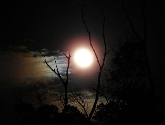 la-nuit-du-loup.70819.jpg