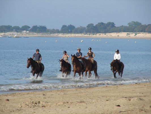 ecuriesdumoulinmoreau-laflotte-iledere-plage.jpg