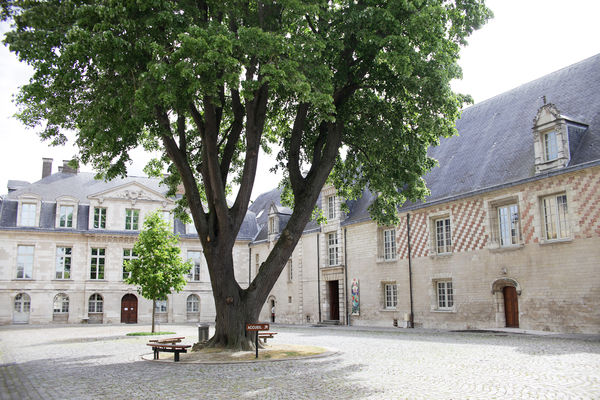 ext - MAMCourArbre © A. Clergeot - Ville de Troyes.jpg