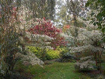 jardindecistus-arbres-sit.jpg