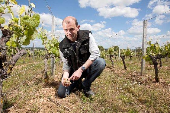 Vins Mercier.jpg