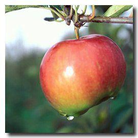 faites-pommes-fresnes-sur-escaut-valenciennes-tourisme-pnr.jpg