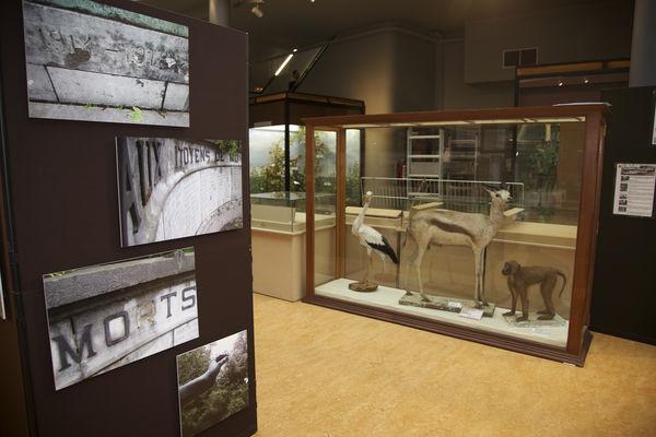 muséesciencesnaturelles-salle-mons.jpg