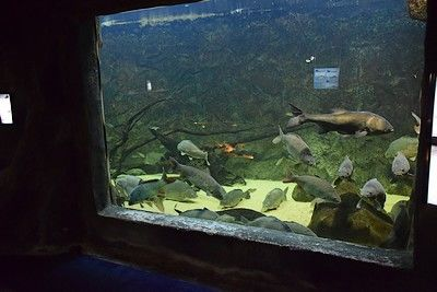 lesmaisonsdulac-aquarium-internet.jpg