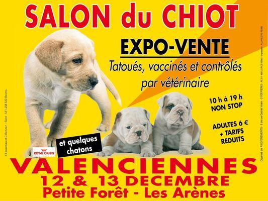 salon-expo-vente-chiot-les-arènes-valenciennes-tourisme.jpg