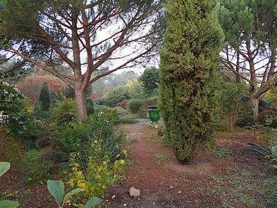 jardindecistus-vase-sit.jpg