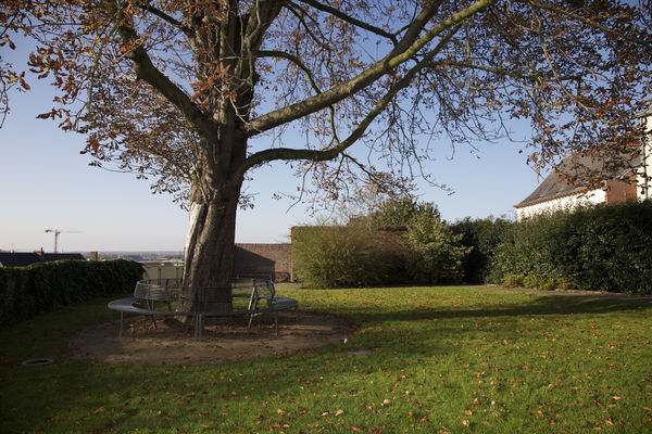 chanoinepuissant-arbre.jpg