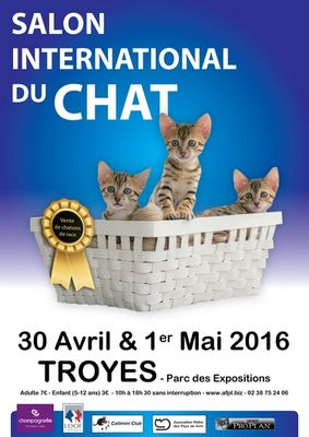 Salon-du-chat.jpg