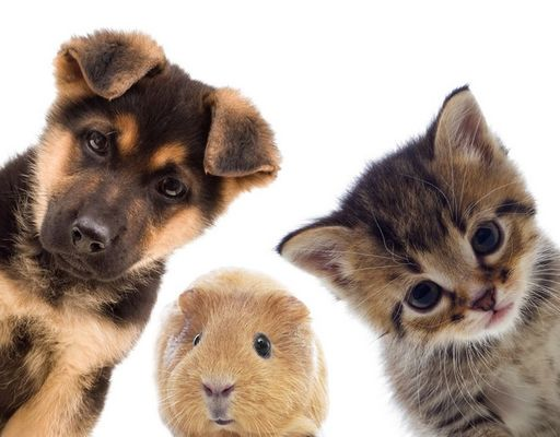 animaux.jpg