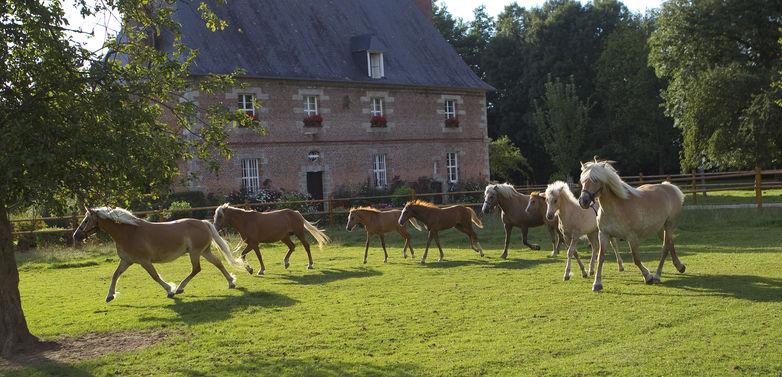 Haras de Rocquigny Gueures - Photo JC Siour Essilac.jpg