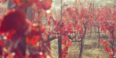 vigne.jpg