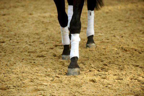 Rencontres Equestres7.jpg