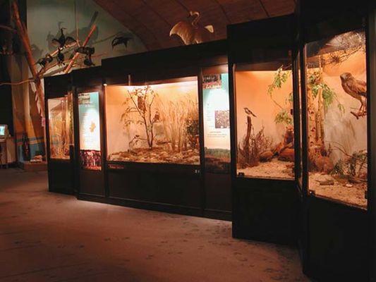 Intérieur du Muséum d'Histoire Naturelle à Blois en Val de Loire
