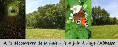 160604-faye-labbesse-Anim-découv-haie2.jpeg