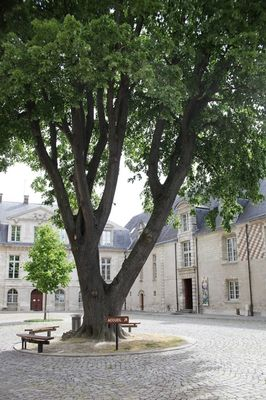 MAMCourArbre11 (c) A. Clergeot - Ville de Troyes.jpg