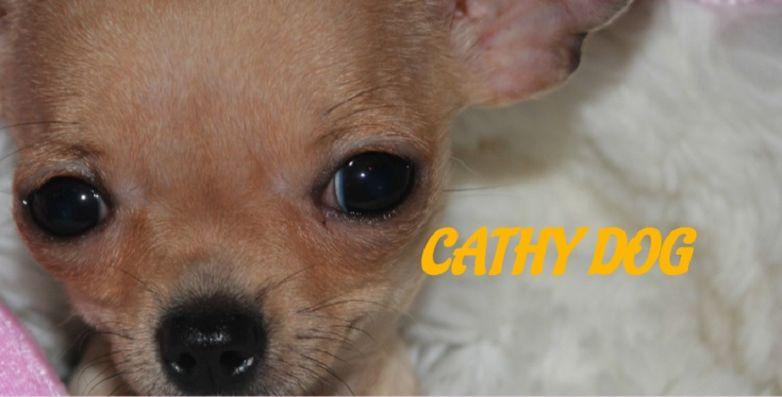 cathydog.jpg