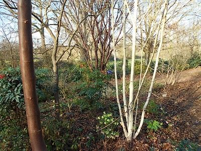 jardindecistus-arbres7-sit.jpg