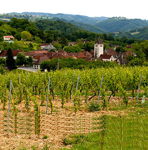 photo présentation vigne glanes.jpg
