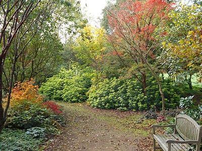 jardindecistus-banc-sit.jpg
