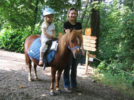 poney Le Bois.JPG