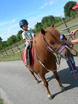 geff roulottes-balade poney1-sit.jpg