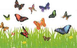 papillons_sophro.jpg