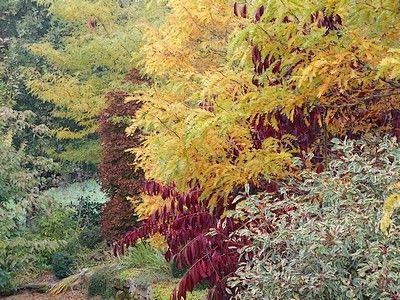 jardindecistus-arbres2-sit.jpg