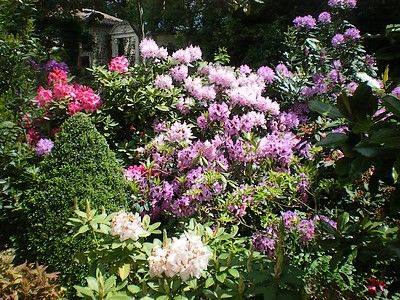 jardindecistus-rhodedendrons-zoom-sit.jpg