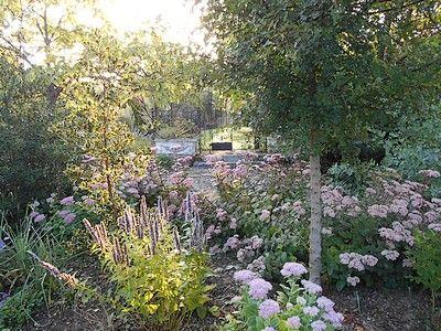 jardindecistus-hortensia-sit.jpg