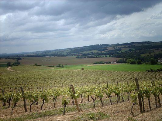 Vignoble du Gers
