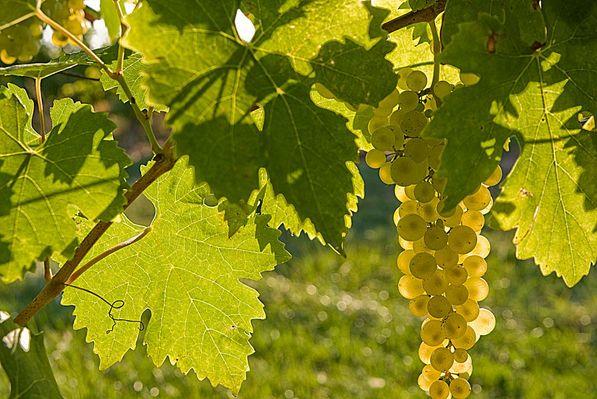 Atelier Secrets de Vignes