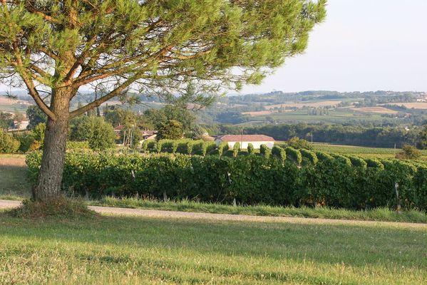 Vignoble du Sud-Ouest