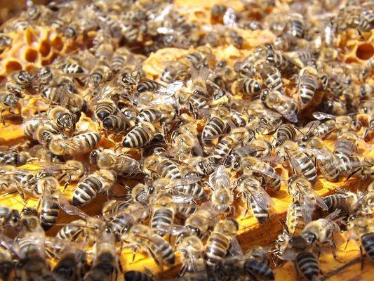 Découverte de la ruche