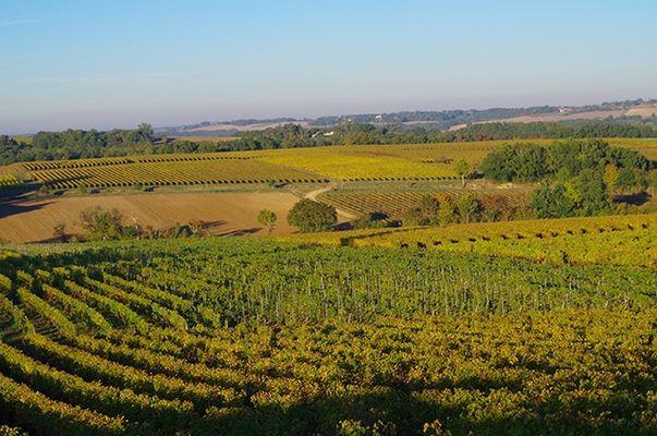 Domaine viticole dans le Gers