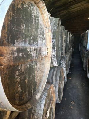 Visite des chais d'armagnac Ténarèze
